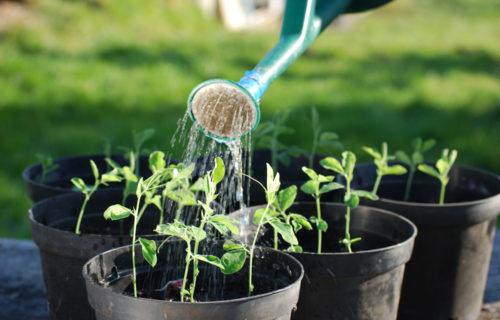 Gartenbau & Landschaftspflege