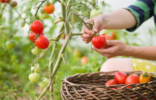 Arbeitstraining Gartenbau und Landschaftspflege – Graz