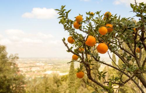 Endlich wieder da – das griechische Obst!