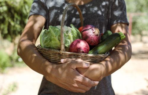 Neu ab Juli 2020: Wöchentlicher Markttag im Gartenbau Graz