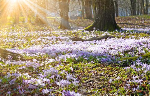 Frühlingserwachen – Wie die Psyche auf die wärmer werdende Jahreszeit reagiert