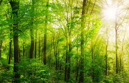Der Trend des 'Waldbadens' als Mehrwert für die Psyche
